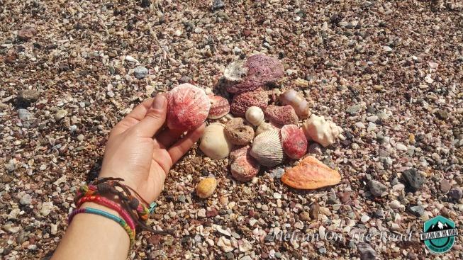 hormuz-renkli-denizkabuklari-a