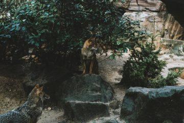 kampta vahşi hayvanlarla karşılaşma
