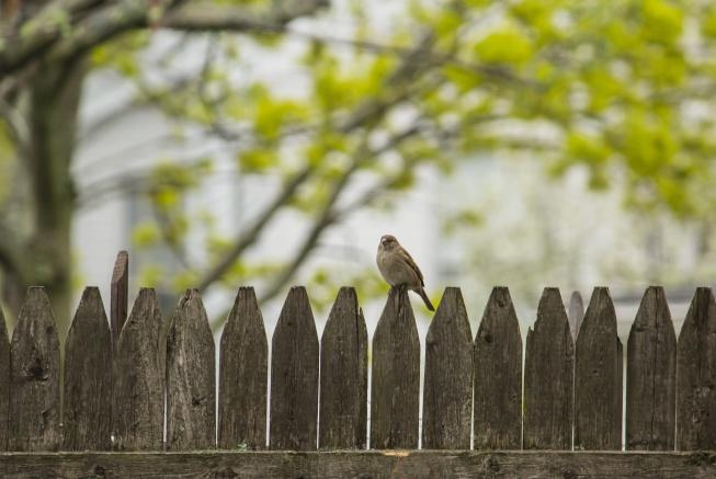 mevsim normalleri çitin üzerinde kuş