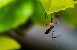 kamplarda sivrisinekten korunmak