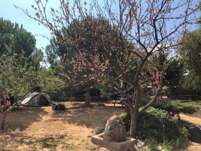 Agora Tatil Durağı Kamp Alanı